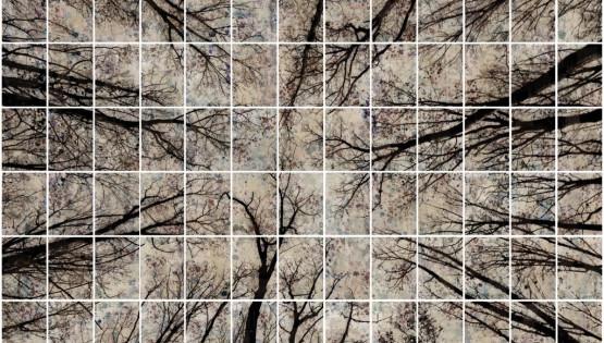 FELISI Alberi 2014 cm. 220 x 350