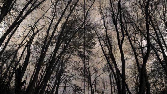 FELISI Alberi dittico 2012 cm. 240 x 150