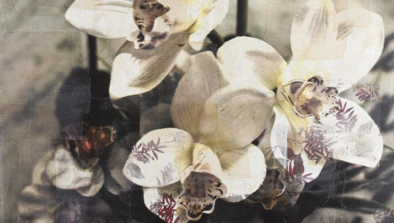 FELISI Fiore 2010 cm. 100 x 100