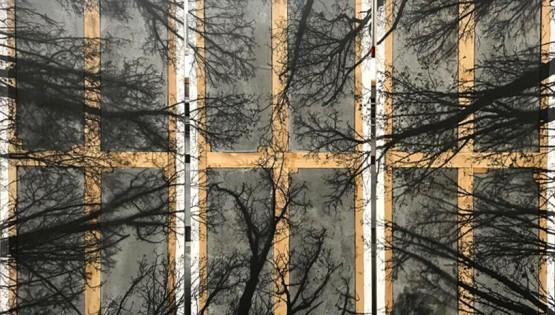 FELISI Alberi cemento e tela 2018 cm. 150×210